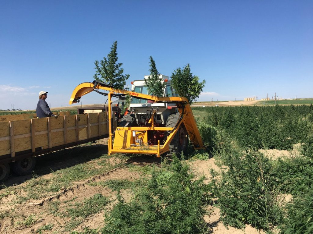 kirpy harvesting hemp plants from the ground and depositing them into a bin